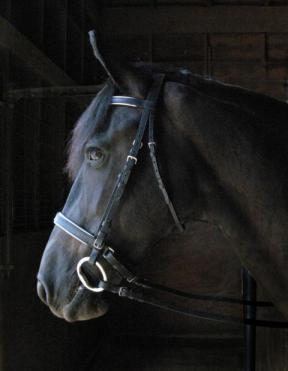SW-4469Wexford Concha Bridle with Laced Rein