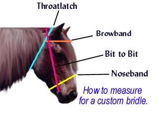 bridlemeasurement
